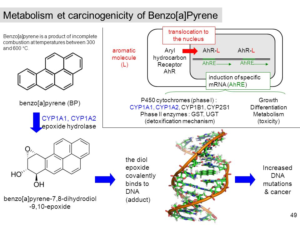 Metabolism et carcinogenicity of Benzo[a]Pyrene
